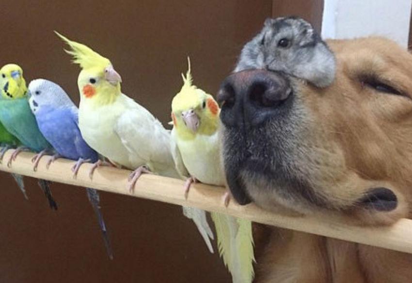 Если есть попугай можно ли завести кота