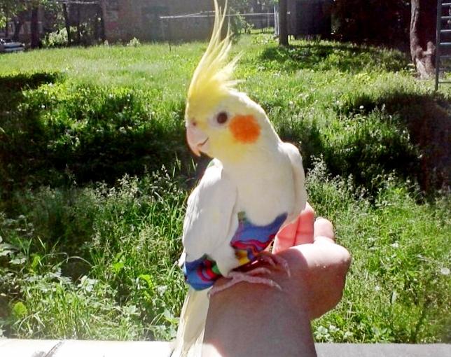 Как сделать воротник для попугаев 852