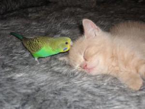 Опасно для попугая