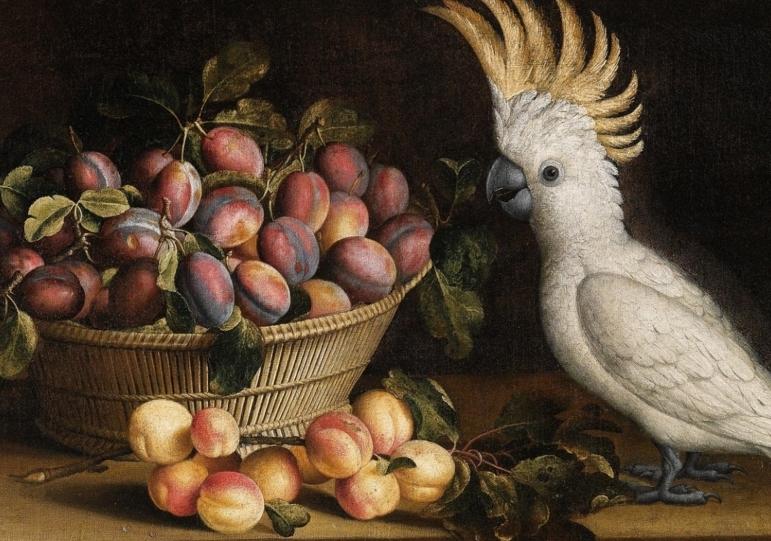Чем кормить попугая какаду?