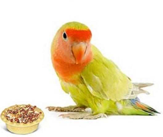 Каталог лучших товаров для животных: Arden Grange