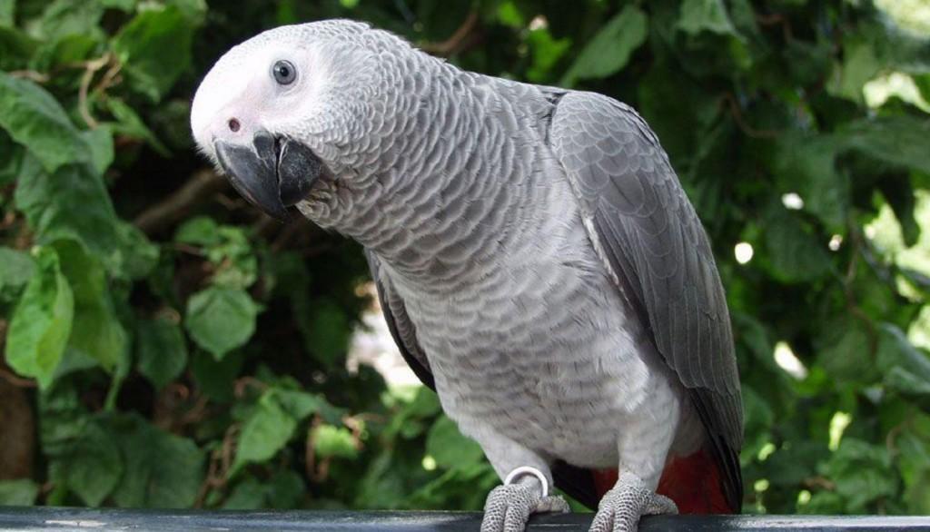 bird-616873_1920