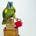 Как выбрать клетку для перевозки попугаев?