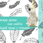 Какаду дома: как найти общий язык с птицей