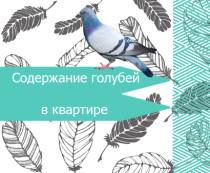 Как разводить голубей