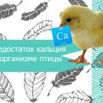 Недостаток кальция в организме птицы