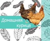 Домашняя курица