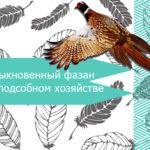 Обыкновенный фазан в подсобном хозяйстве