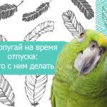 Попугай на время отпуска: что с ним делать