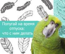 Попугай на время отпуска