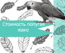 Стоимость попугая жако