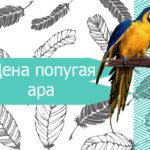 Цена попугая ара