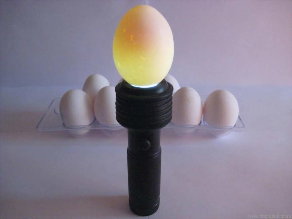 Овоскопирование куриного яйца