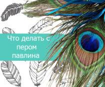 Что делать с пером павлина