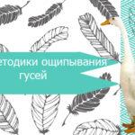 Методики ощипывания гусей