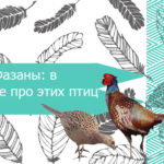 Фазаны: все про этих птиц