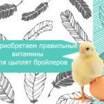 Приобретаем правильные витамины для цыплят бройлеров