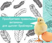 правильные витамины для цыплят бройлеров