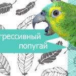 Методы устранения агрессии птиц при стайном содержании