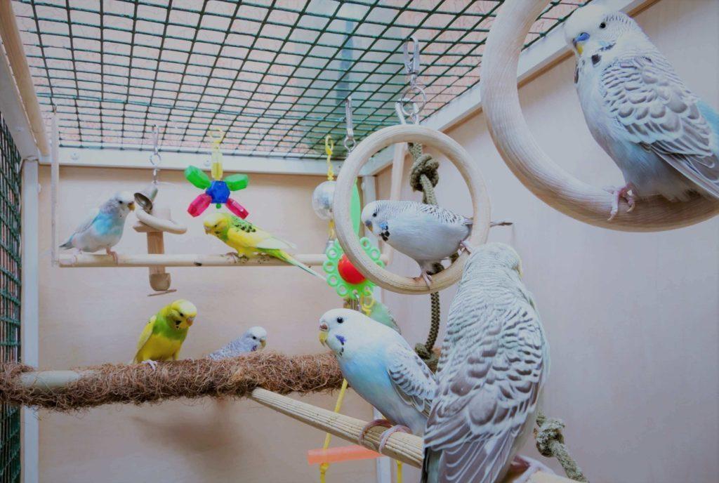 какие попугаи для дома