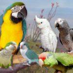 Как выбрать попугая для дома?