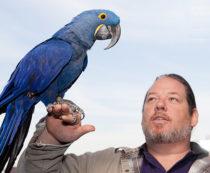 большие попугаи в мире