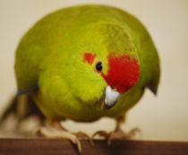 Как назвать своего попугая