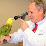 Чем поможет ветеринар для птиц