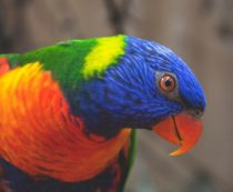 самые красивые попугаи в мире