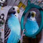 Что делать, если любимый попугай отказывается есть, пить?