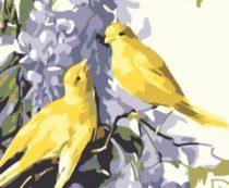 Сирень в рационе попугаев
