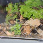 Разведение кормовых насекомых для певчих и насекомоядных птиц