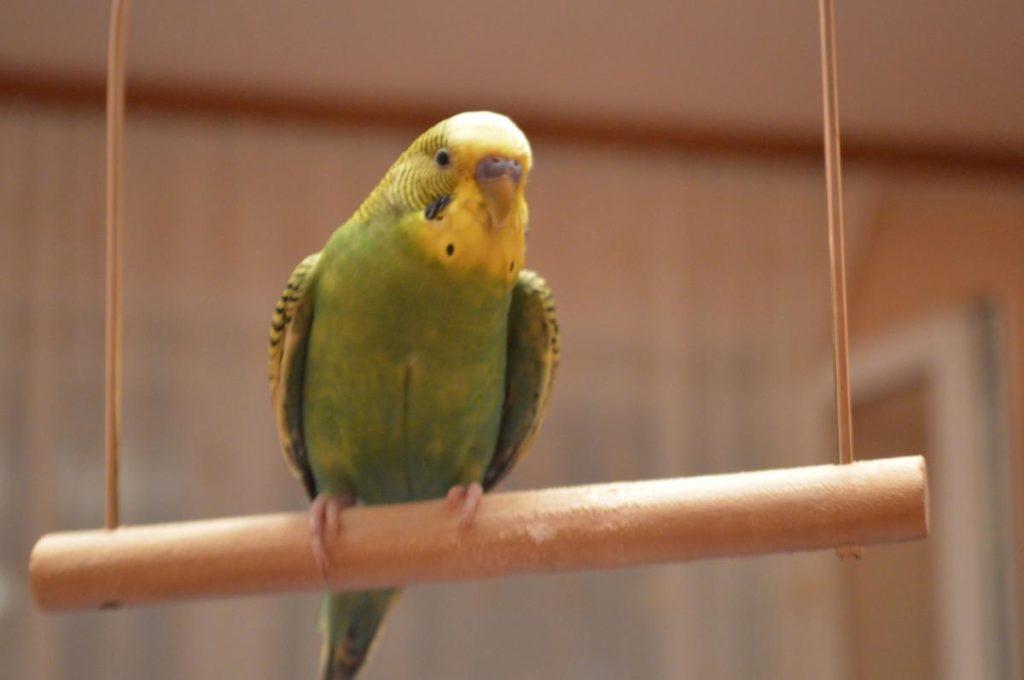 Гиподинамия у птиц