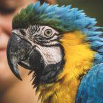 Питомник для попугаев «Атол»: деятельность и место нахождения