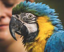 Питомник для попугаев