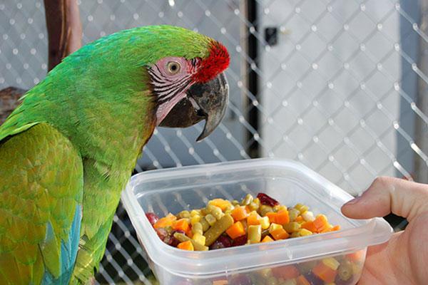 Овощи и фрукты для попугая