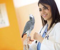 Анализы крови у птиц
