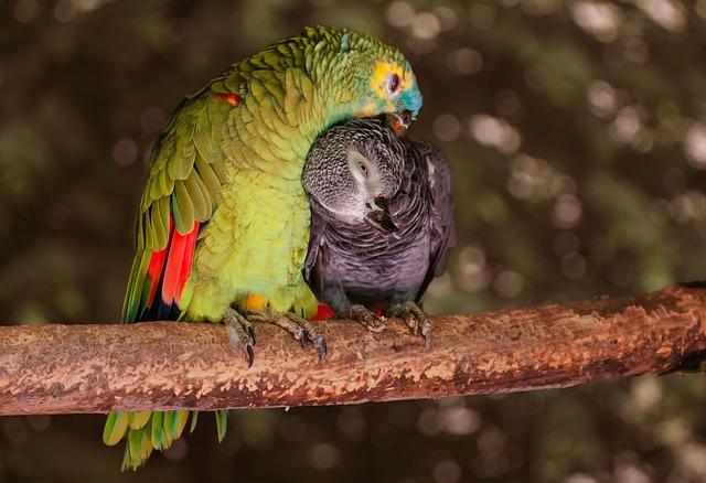 Питомник для попугаев «Атол»
