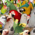 Топ-10 птиц для домашнего содержания