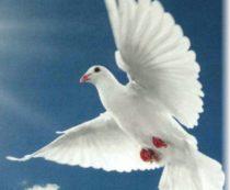 Народные приметы про птиц.