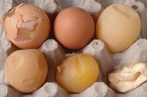 Нестандартные яйца кур.