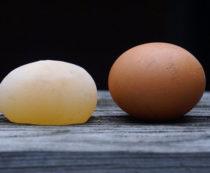 Яйцо без скорлупы у кур: стоит ли волноваться?