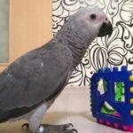 Где купить попугая жако: список питомников