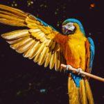 Где купить попугая ара: описание питомников