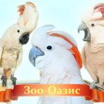 Знаменитый питомник Зоо-Оазис: описание и реальные отзывы покупателей