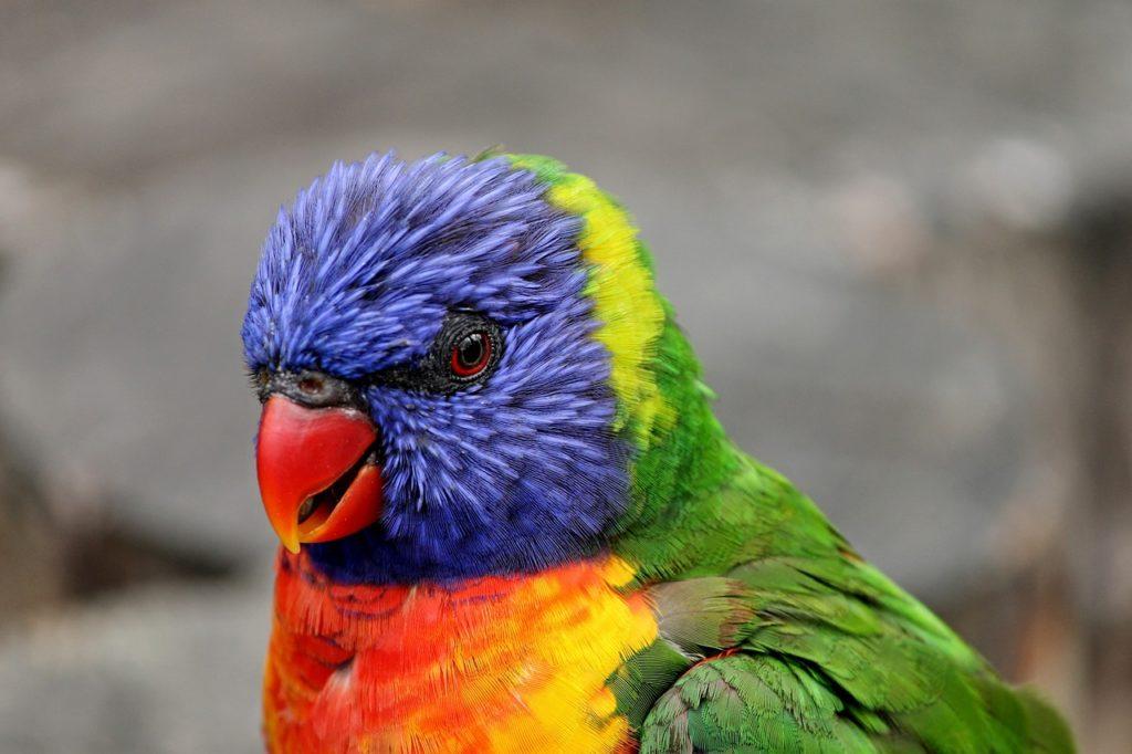 цена на экзотических попугаев