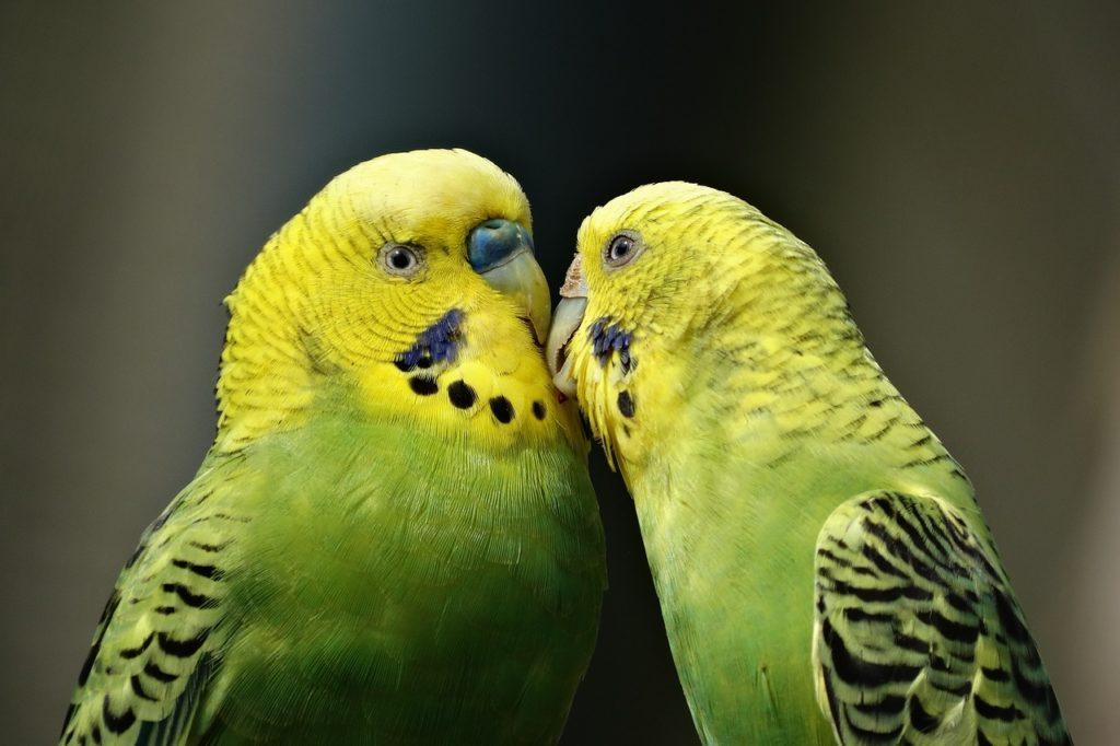 бизнес на попугаях
