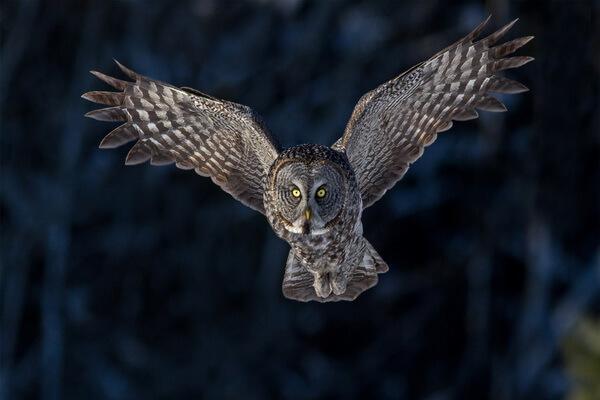 К чему снится пятнистая сова - значения сна