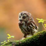 Самые красивые совы