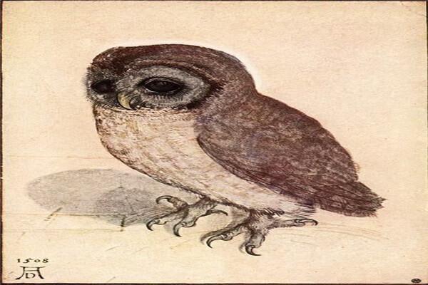 Совы в живописи - «Птенец совы», Дюрер